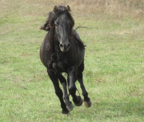 storybook horse farm prince